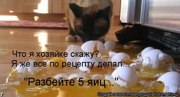 "Котоматрица: Я же все по рецепту делал... ""Разбейте 5 яиц..."" Что я хозяйке скажу?"