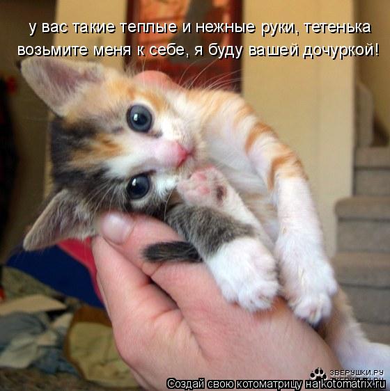 Котоматрица: у вас такие теплые и нежные руки, тетенька возьмите меня к себе, я буду вашей дочуркой!
