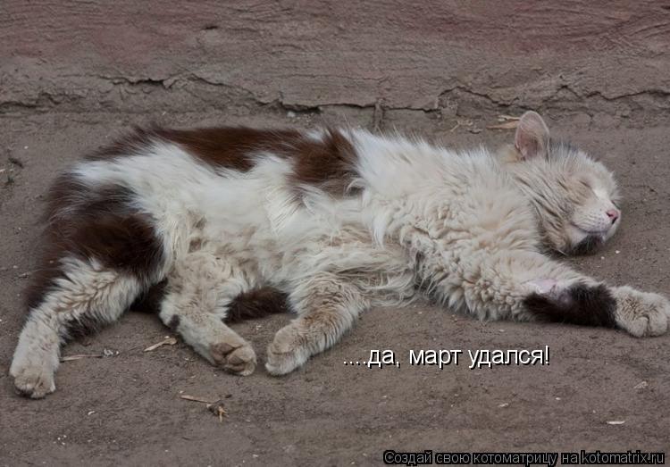 Котоматрица: Уфф... устал... ....да, март удался!