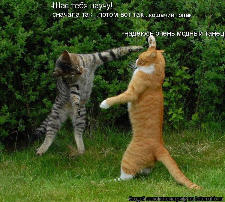 Котоматрица: -Щас тебя научу! -надеюсь очень модный танец -сначала так...потом вот так ..кошачий гопак