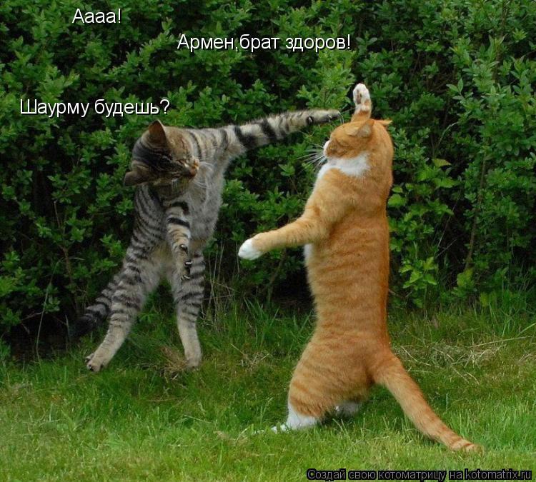 Котоматрица: Аааа! Армен,брат здоров! Шаурму будешь?