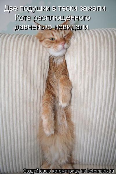 Котоматрица: Две подушки в тески зажали. Кота расплющенного давненько невидали.
