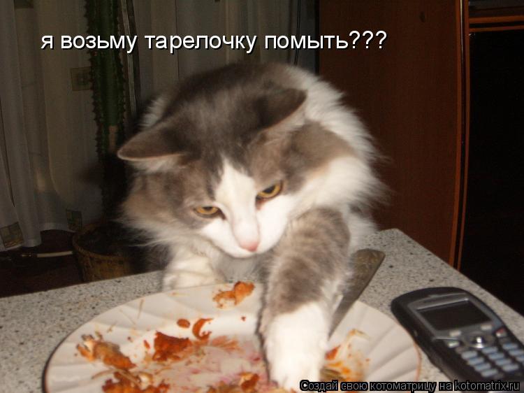 Котоматрица: я возьму тарелочку помыть???