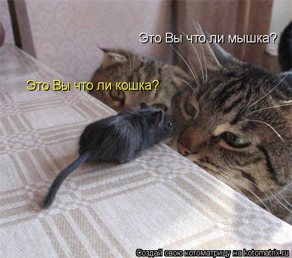 Котоматрица: Это Вы что ли мышка? Это Вы что ли кошка?