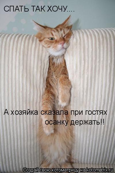 Котоматрица: СПАТЬ ТАК ХОЧУ.... А хозяйка сказала при гостях осанку держать!!