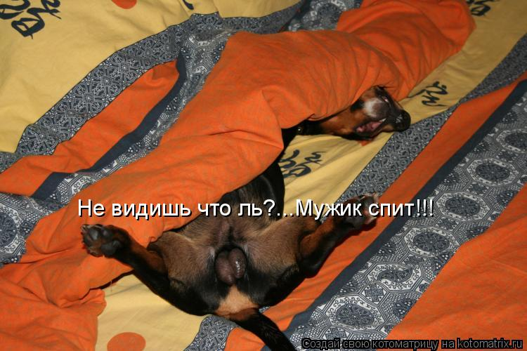 Котоматрица: Не видишь что ль?...Мужик спит!!!