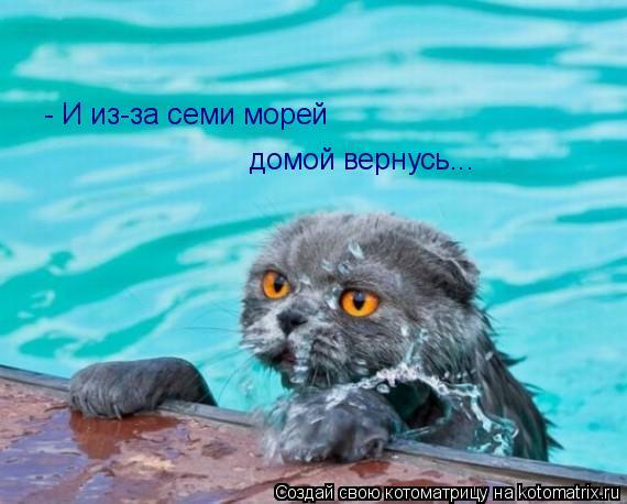 Котоматрица: - И из-за семи морей домой вернусь...