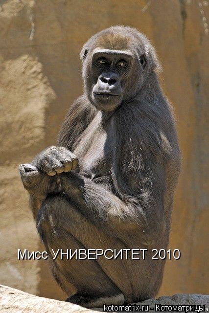 Котоматрица: Мисс УНИВЕРСИТЕТ 2010