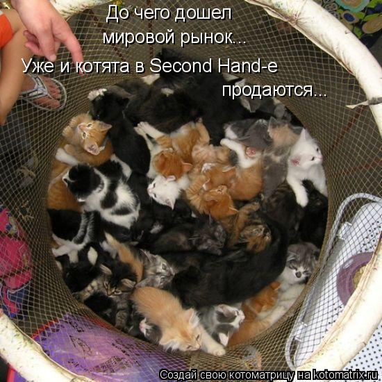 Котоматрица: До чего дошел мировой рынок... Уже и котята в Second Hand-е продаются...