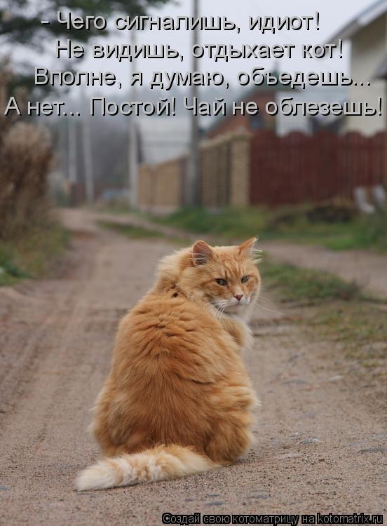 Котоматрица: - Чего сигналишь, идиот! Не видишь, отдыхает кот! Вполне, я думаю, объедешь... А нет... Постой! Чай не облезешь!