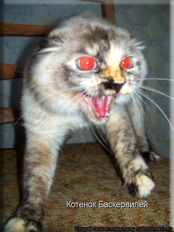 Котоматрица: Котенок Баскервилей
