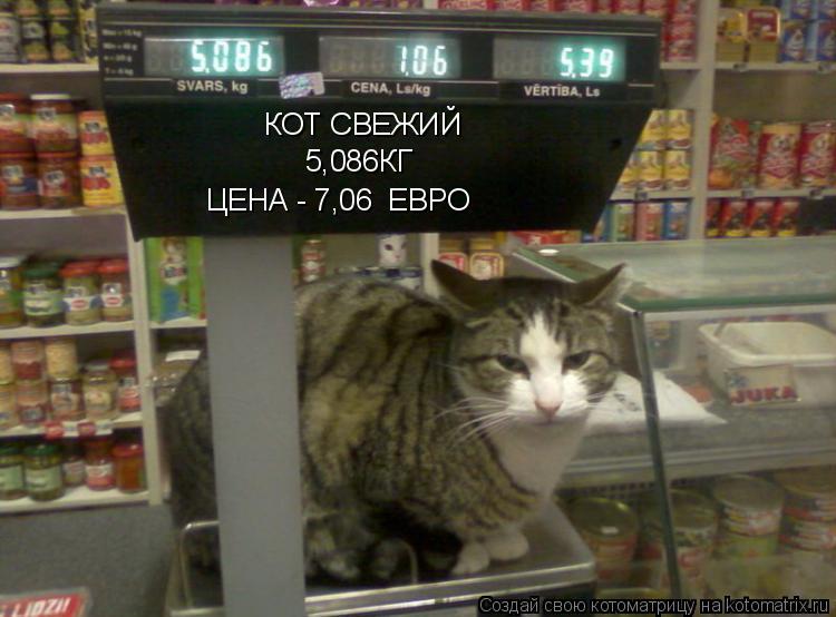 Котоматрица: КОТ СВЕЖИЙ 5,086КГ ЦЕНА - 7,06  ЕВРО
