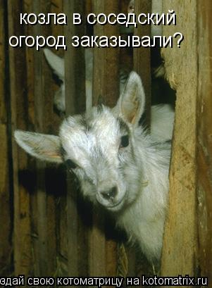 Котоматрица: козла в соседский  огород заказывали?