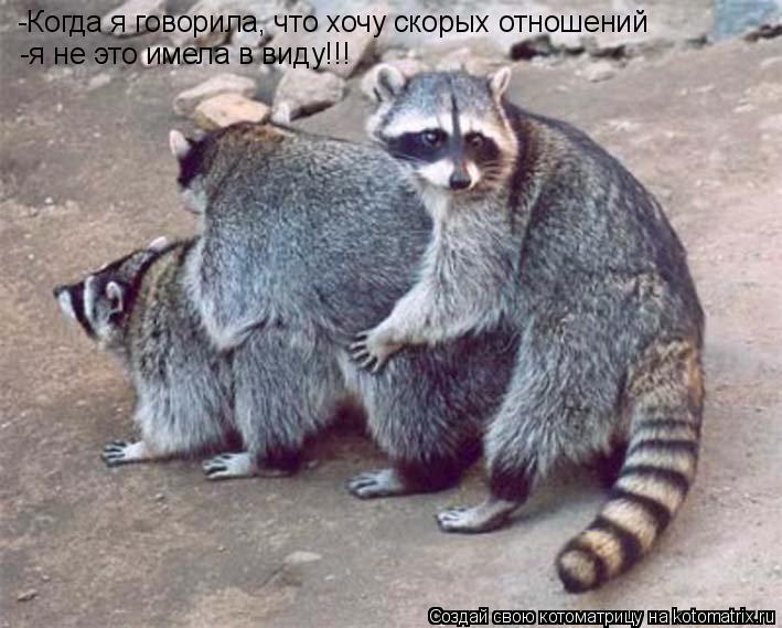 Котоматрица: -Когда я говорила, что хочу скорых отношений -я не это имела в виду!!!