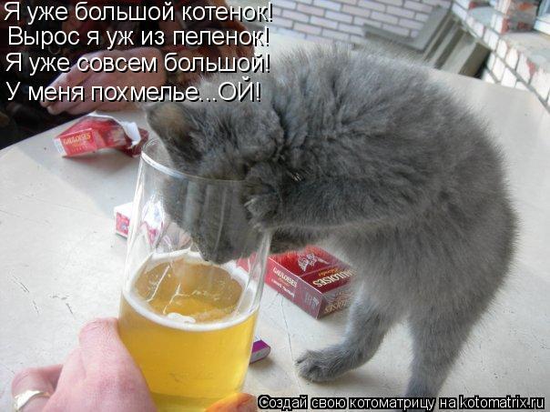 Котоматрица: Я уже большой котенок! Вырос я уж из пеленок! Я уже совсем большой! У меня похмелье...ОЙ!