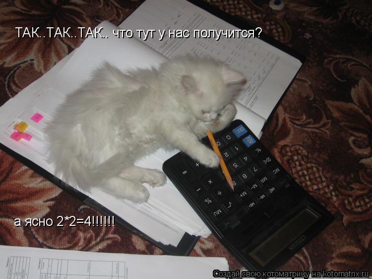 Котоматрица: ТАК..ТАК..ТАК.. что тут у нас получится? а ясно 2*2=4!!!!!!