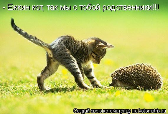 Котоматрица: - Ежкин кот, так мы с тобой родственники!!!