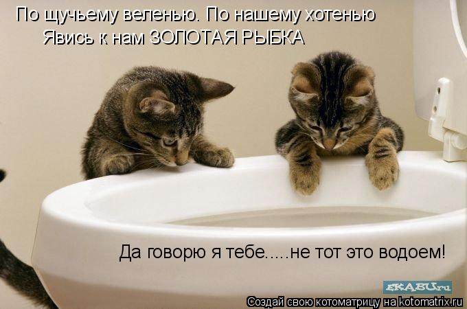 Котоматрица: По щучьему веленью. По нашему хотенью Явись к нам ЗОЛОТАЯ РЫБКА Да говорю я тебе.....не тот это водоем!