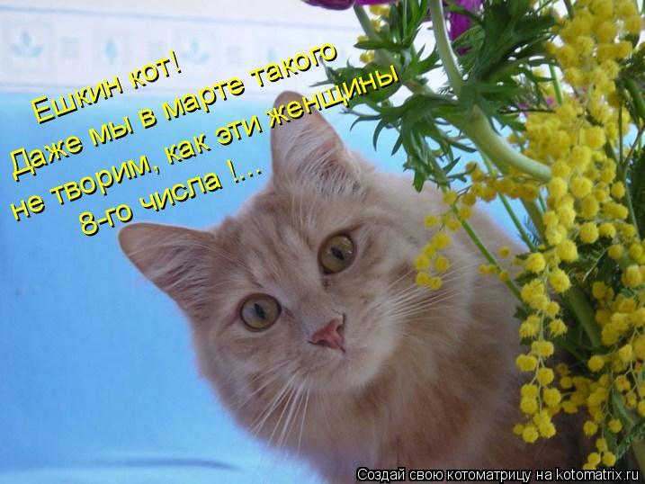 Котоматрица: Ешкин кот! Даже мы в марте такого не творим, как эти женщины 8-го числа !...
