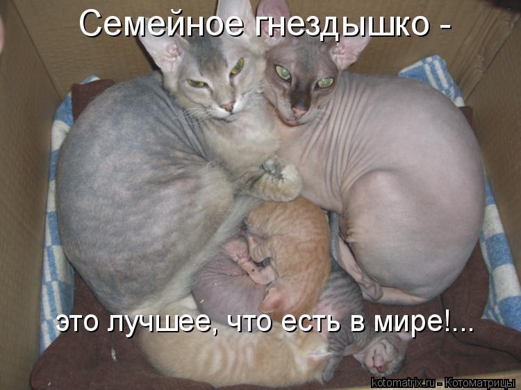 Котоматрица: Семейное гнездышко - это лучшее, что есть в мире!...