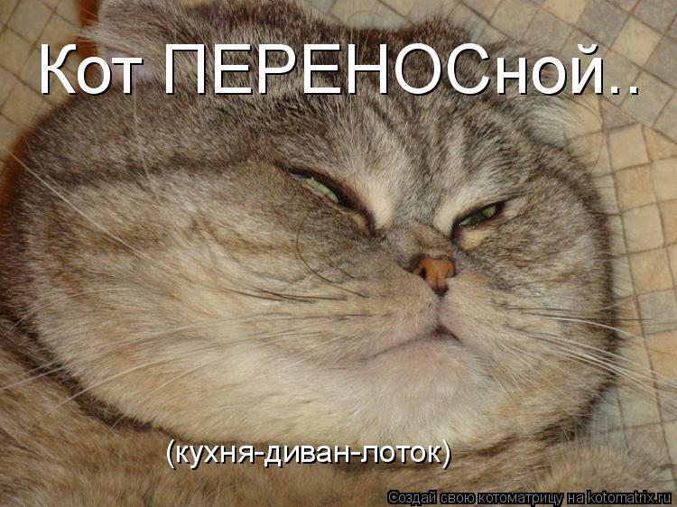 Котоматрица: Кот ПЕРЕНОСной.. (кухня-диван-лоток)