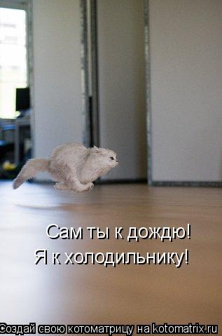 Котоматрица: Сам ты к дождю! Я к холодильнику!