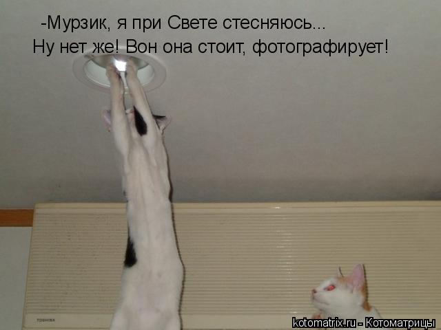 Котоматрица: -Мурзик, я при Свете стесняюсь... Ну нет же! Вон она стоит, фотографирует!