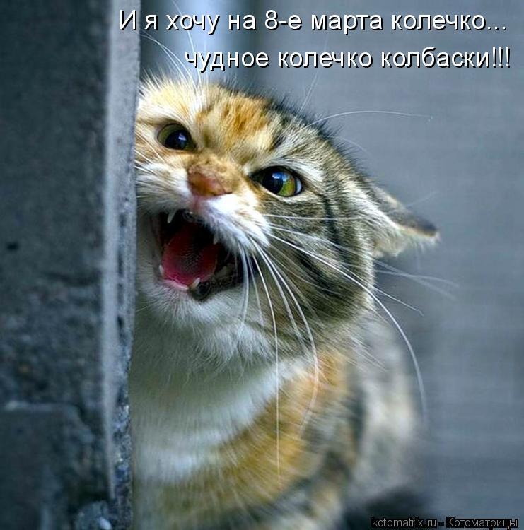 Котоматрица: И я хочу на 8-е марта колечко... чудное колечко колбаски!!!