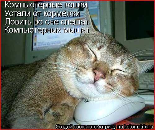 Котоматрица: Компьютерные кошки Устали от кормёжки Ловить во сне спешат Компьютерных мышат