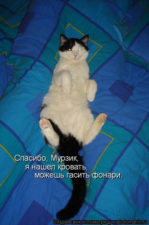 Котоматрица: Спасибо, Мурзик, я нашел кровать, можешь гасить фонари.