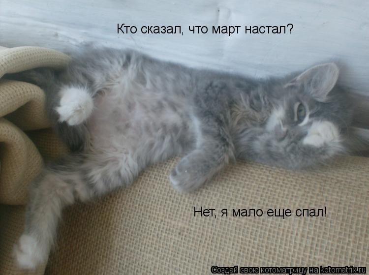 Котоматрица: Кто сказал, что март настал? Нет, я мало еще спал!