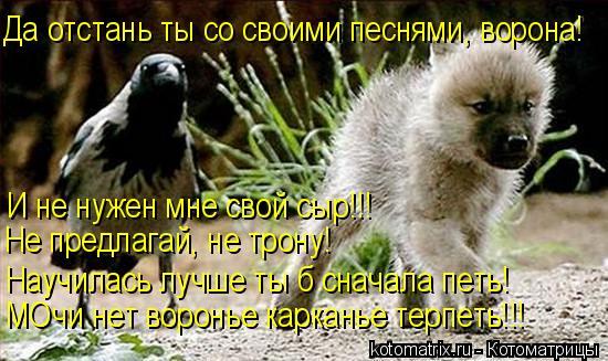 Котоматрица: Да отстань ты со своими песнями, ворона! И не нужен мне свой сыр!!!  Не предлагай, не трону! Научилась лучше ты б сначала петь! МОчи нет воронье