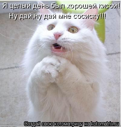 Котоматрица: Я целый день был хорошей кисой! Ну дай,ну дай мне сосиску!!!