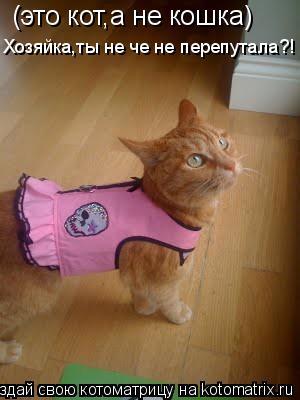 Котоматрица: (это кот,а не кошка) Хозяйка,ты не че не перепутала?!