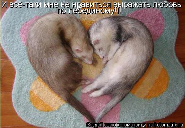 Котоматрица: И всё-таки мне не нравиться выражать любовь по лебединому!!!