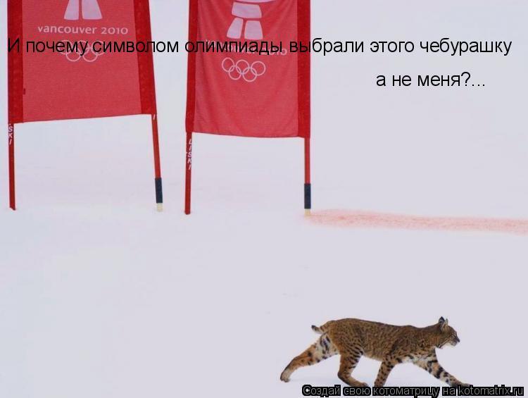 Котоматрица: И почему символом олимпиады выбрали этого чебурашку а не меня?...