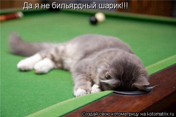 Котоматрица: Да я не бильярдный шарик!!!