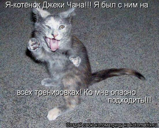 Котоматрица: Я-котёнок Джеки Чана!!! Я был с ним на  всёх тренировках! Ко мне опасно  подходить!!!
