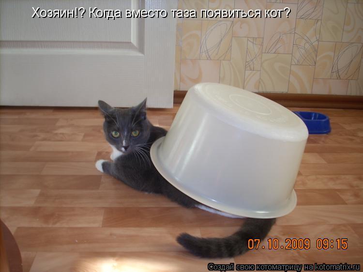 Котоматрица: Хозяин!? Когда вместо таза появиться кот?