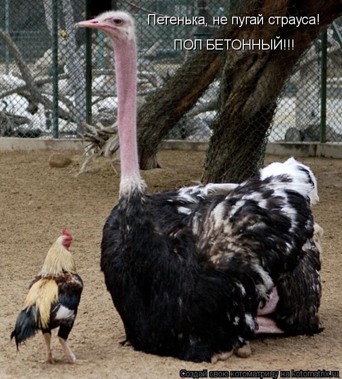 Котоматрица: Петенька, не пугай страуса! ПОЛ БЕТОННЫЙ!!!
