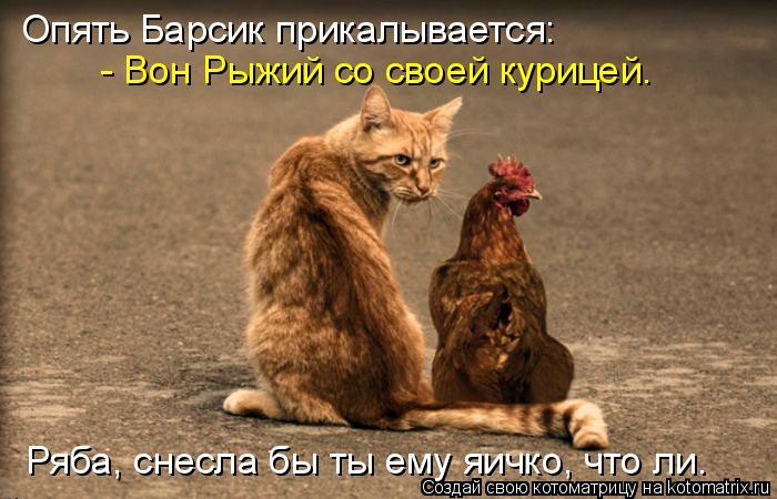 Котоматрица: Опять Барсик прикалывается:  - Вон Рыжий со своей курицей. Ряба, снесла бы ты ему яичко, что ли.