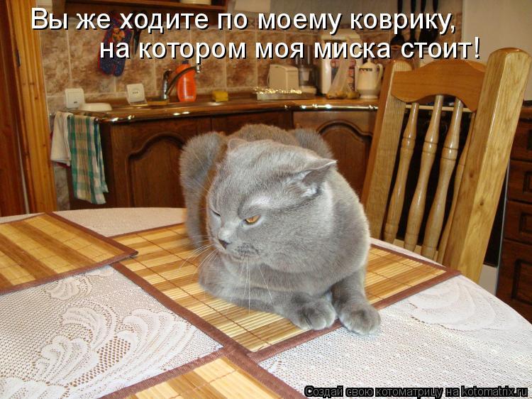 Котоматрица: Вы же ходите по моему коврику, на котором моя миска стоит!