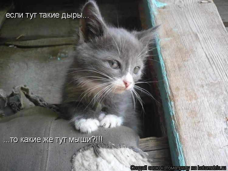 Котоматрица: если тут такие дыры... ...то какие же тут мыши?!!!