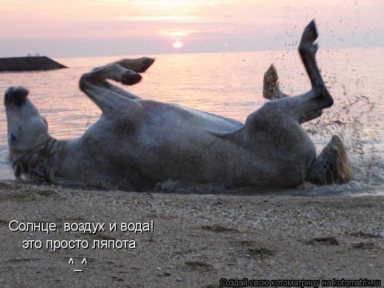 Котоматрица: Солнце, воздух и вода!  это просто ляпота ^_^ ^_^