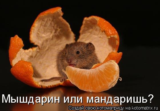 Котоматрица: Мышдарин или мандаришь?