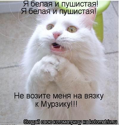 Котоматрица: Я белая и пушистая! Я белая и пушистая! Не возите меня на вязку к Мурзику!!!