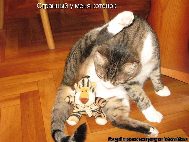 Котоматрица: Странный у меня котёнок...