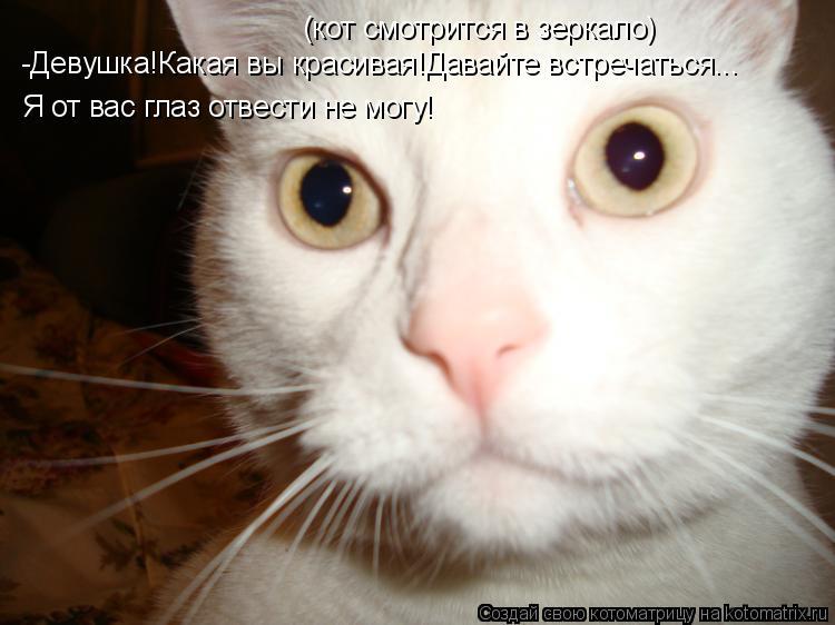 Котоматрица: (кот смотрится в зеркало) -Девушка!Какая вы красивая!Давайте встречаться... Я от вас глаз отвести не могу!