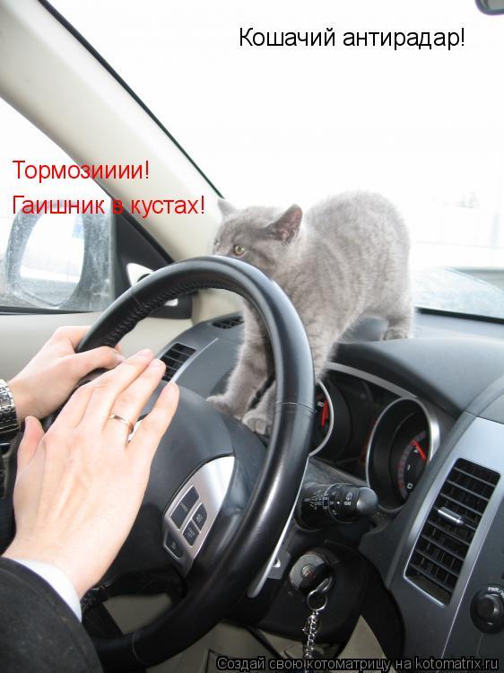 Котоматрица: Кошачий антирадар! Тормозииии! Гаишник в кустах!