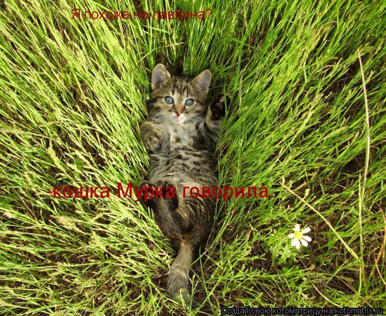 Котоматрица: Я похожа на павлина? -кошка Мурка говорила.